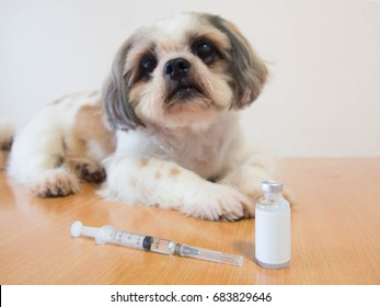 Nice dog preparing for vaccine injection with medical vial and syringe on wood table at veterinary clinic. Vaccination, World rabies day and pet health care concept. Selective focus.