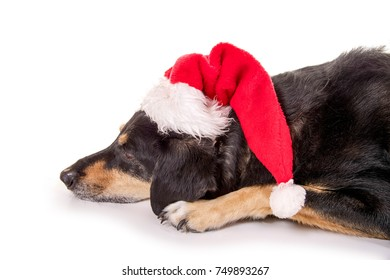 Nice dog with santa claus hat relaxing