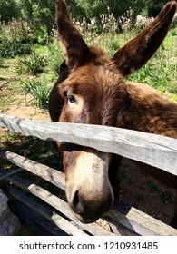 A nice donkey behind a fence in Menorca, Balearic Island of Spain