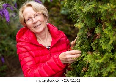 A nice elderly woman is touching a fir tree in a beautiful garde