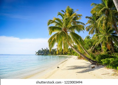 A nice and empty beach in a tropical desert island of Sumatra, Indonesia. Blue sky, white sand and coconut trees, a dream holiday place to relax, snorkel and rest.
