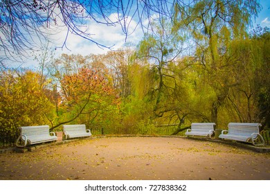 nice empty white benches in the beautiful park in autumn