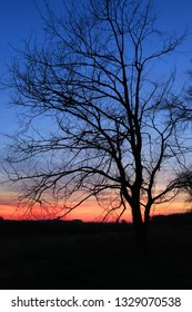 nice evening scene with tree on sunset sky background