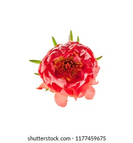nice flower isolated