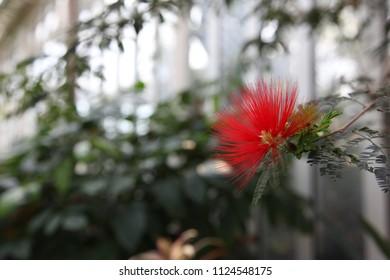 nice flower photograf