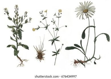 Nice flowers. Collection of flowers on a white background.