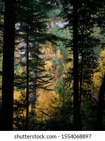 nice forest backlight in autumn