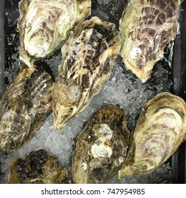 nice fresh Ice cold oysters On Ice ready to eat.
