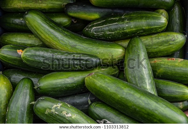 Nice freshly harvested cucumbers.