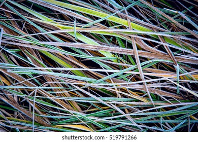 nice frozen grass - abstract natural background