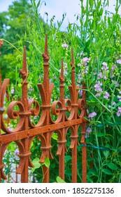 Schöne Gartendekoration mit Zaun und Blumen (Lauberbse)