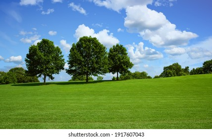 A nice green grassy hill with trees on top against blue sky