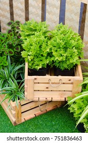 Nice green plant in wooden box for decoration