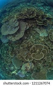 nice hard coral