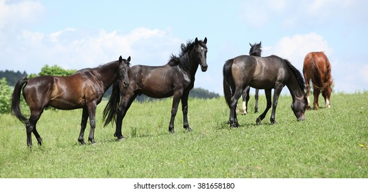 Nice herd of horses beeing together on green pasturage