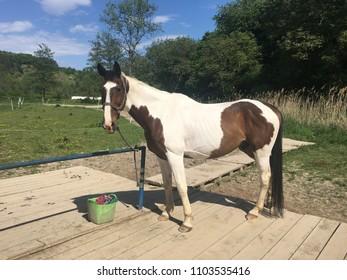 Nice horse in farm