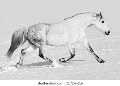 Nice horse running through snowy landscape