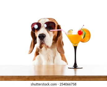 nice hound with cocktail, isolated on white
