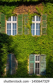 Nice house covered with ivy