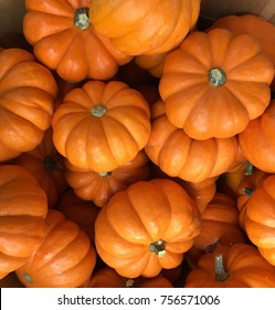 Nice Image of many small holloween pumpkins in a pile