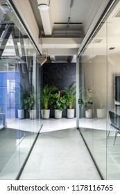 Nice interior in a luminous office in a loft style with gray and textured black walls and a glossy floor. There are glass partitions with doors and curtains, green plants in the big pots, elevator.