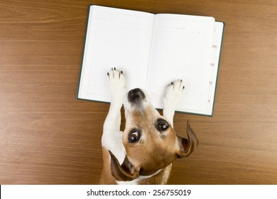 Nice Jack Russell terrier dog making notes in the album white sketch book. Empty space you can put your information. Looking to the camera
