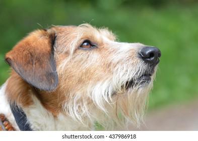 Nice Krom dog