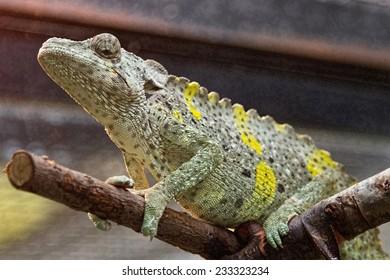 nice lizard jungle areas with green tones