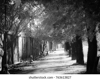 Nice long way with around the tree.black and white image