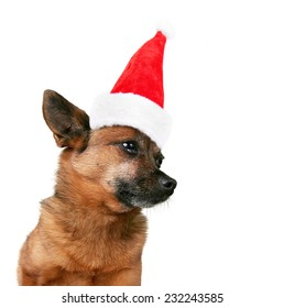 a nice looking chihuahua profile on a white background with a santa hat on for christmas