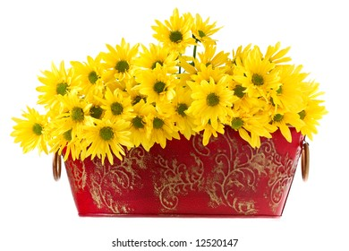 Nice Marguerites Flowers in a red bowl
