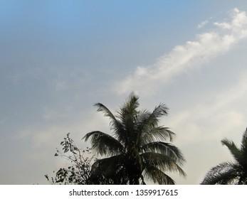 nice mild blue mild sky wallpaper,captured in spring time ,