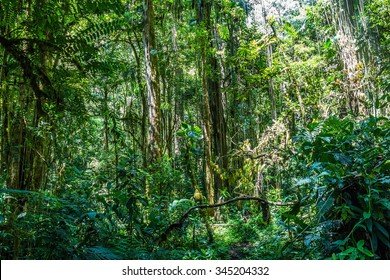 Nice overview of the jungle landscape in Panama
