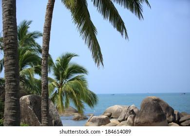 nice palm trees at sunny seaside beach