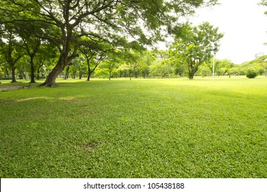 Nice park in the city with trees and grass