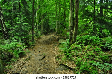 nice path through green forest