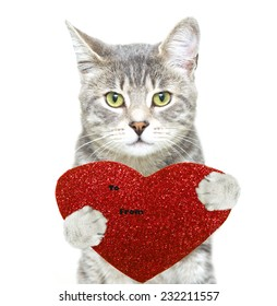 nice photo of a grey tabby cat with a red heart card