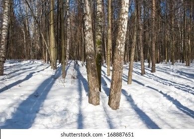 Nice photo of winter forest covered by white snow