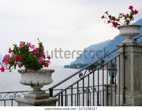 nice-pink-blossoms-lakeside-italy-600w-1