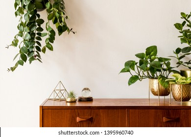 Nice and retro space of home interior with  vintage cupboard with elegant gold accessories, a lot of plants in stylish pots. Cozy home decor. Minimalistic concept. Home garden. Copy space. Template - Shutterstock ID 1395960740