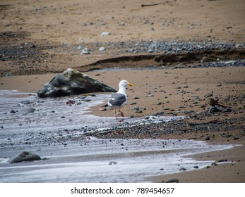 Nice seagull stands by a big stone on the beach. Beautiful seascape