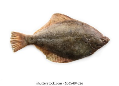 Nice shaped Flatfish or flounders (Pleuronectidae) also known as plaice,dab,sole or flukes, isolated on white. Top side.