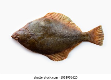 Nice shaped Flatfish or flounders (Pleuronectidae)also known as plaice,dab,sole or flukes, isolated on white. Top side. facing left.