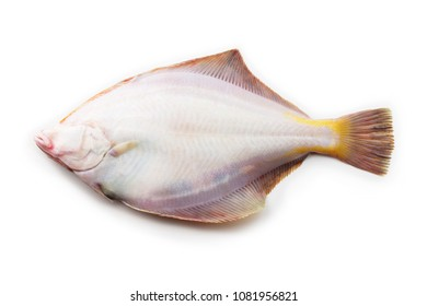 Nice shaped Flatfish or flounders (Pleuronectidae)also known as plaice,dab,sole or flukes, isolated on white. back side. facing left.