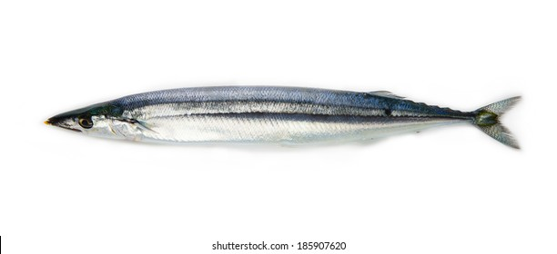 Nice shaped Pacific saury (Cololabis saira / mackerel pike / sanma ) isolated on white.
