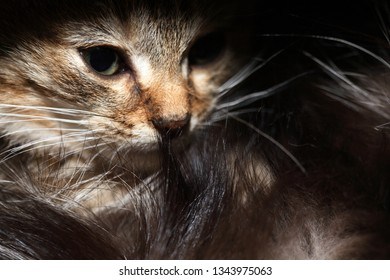 Nice small kitty portrait against dark background