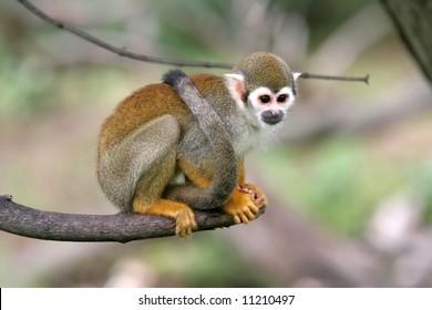 A nice small monkey