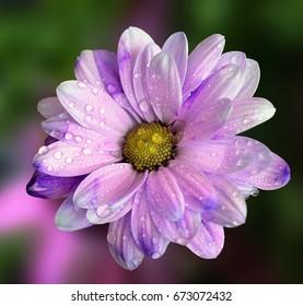 Nice spring flower