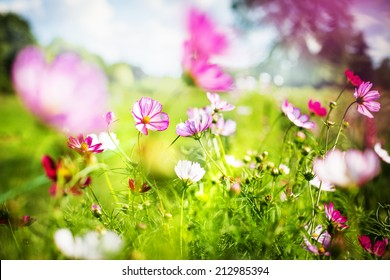 Nice spring or summer day with beautiful fresh field flowers