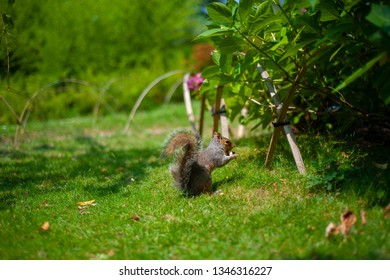 Nice squirrel on the green grass in the park.